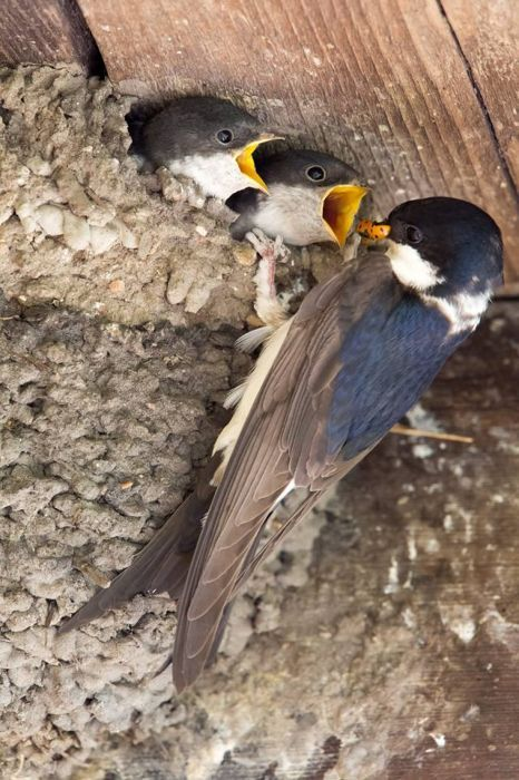 f9f34c3f6e77 Kittike oldala - G-Portál | Adorable Animals | Pinterest | Birds ...