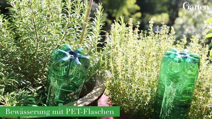 #mit #PETFlaschen #Wasserpflanzen - Water plants with PET bottles  Wasserpflanzen mit PET-Flaschen #einheimischepflanzen