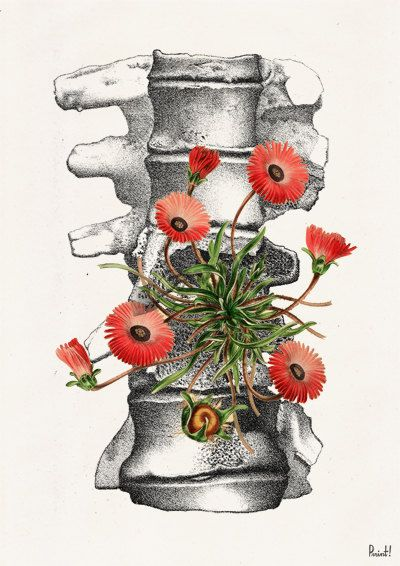 Human Anatomy Vertebrae With Wild Flowers Poster Print Anatomical