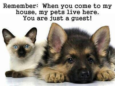 Pin By Lisa Mosher On Lisa S Board Cute Cats And Dogs Dog Cat Pictures Dog Wallpaper