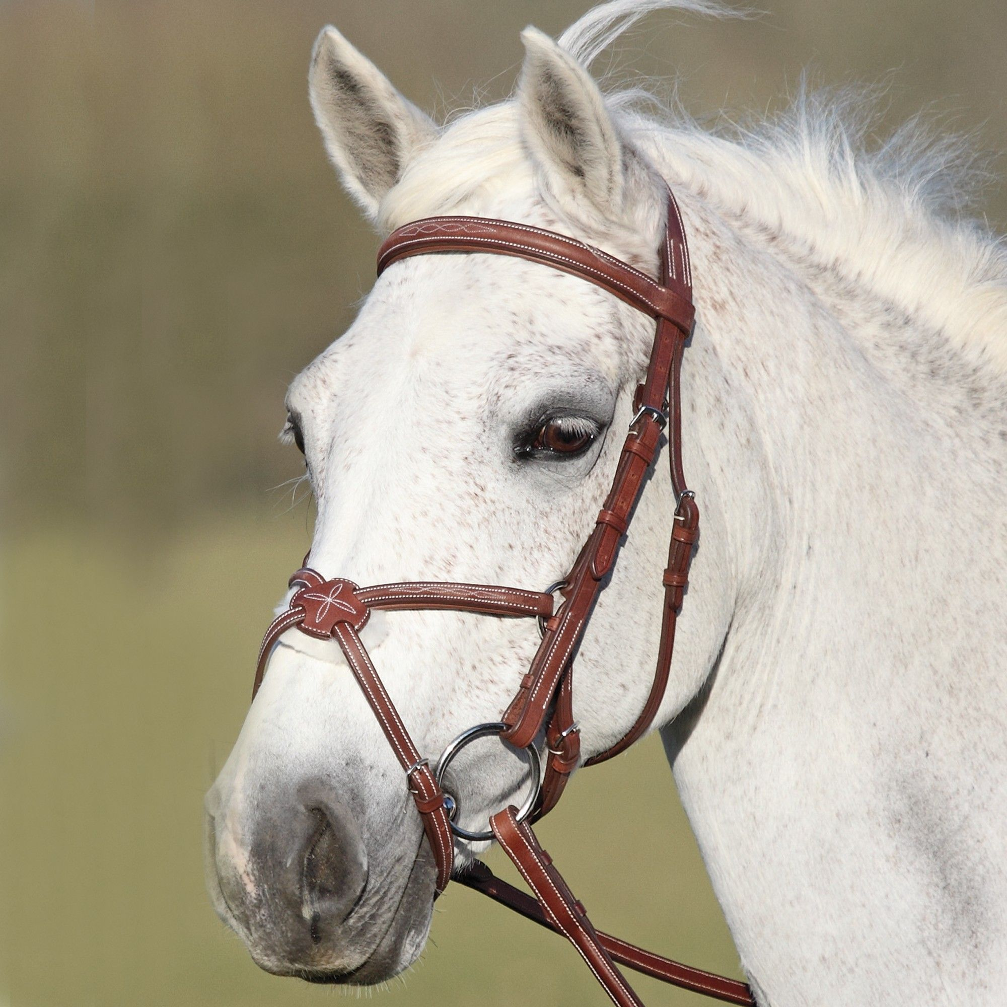 Types and Uses of Equestrian Bridles – equestrianprovider