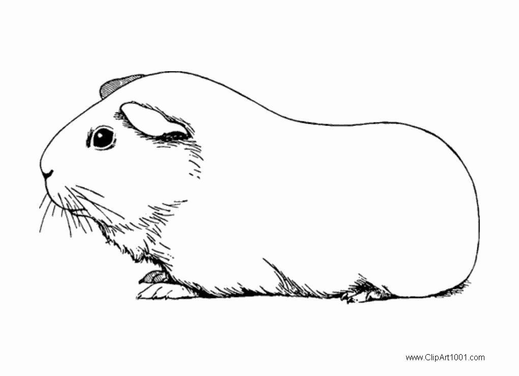 Guinea Pig Coloring Pages Easy Designs Trend