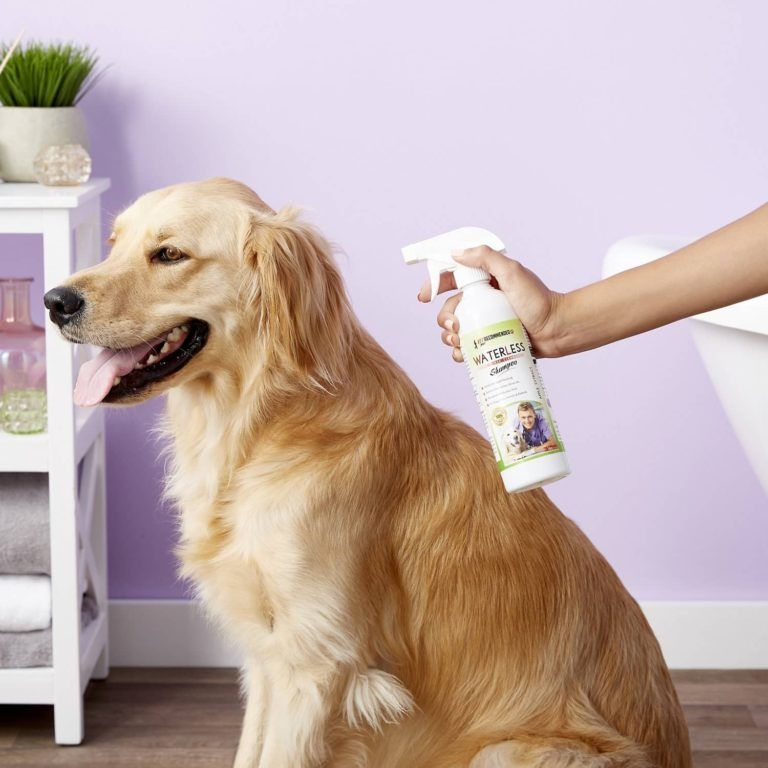 Top 7 Best Waterless Shampoo For Dogs That Absolutely Works Dog Shampoo Waterless Shampoo Dogs