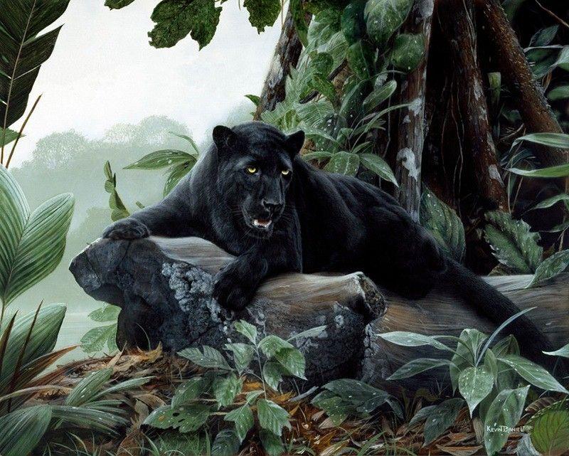 картинки джунгли с пантерами пышные формы едва