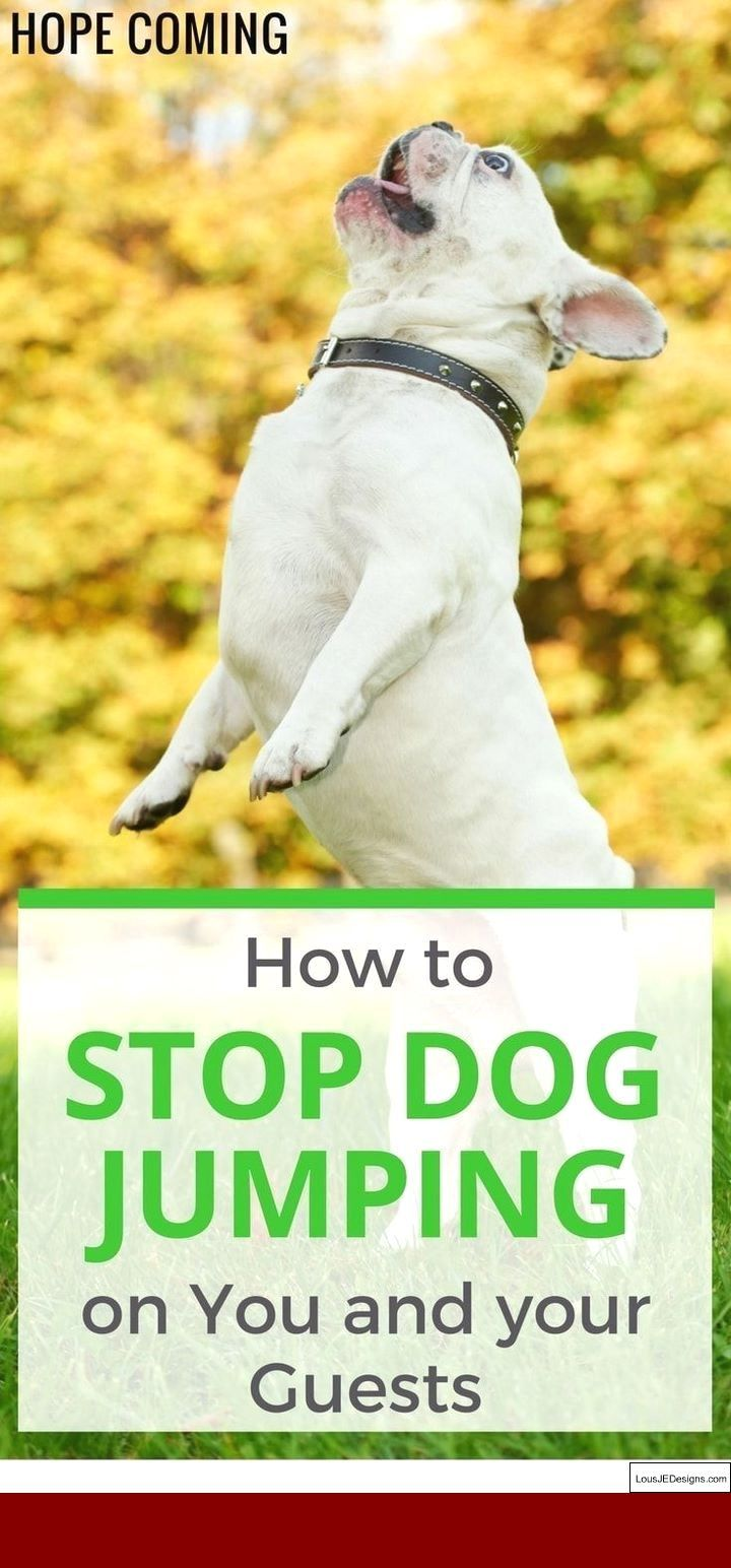 Idea by susan duchene on Training Tips Easiest dogs to