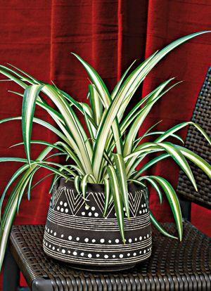 plantes panach es luminosit assur e pinterest plantes vertes sombre et plantes. Black Bedroom Furniture Sets. Home Design Ideas