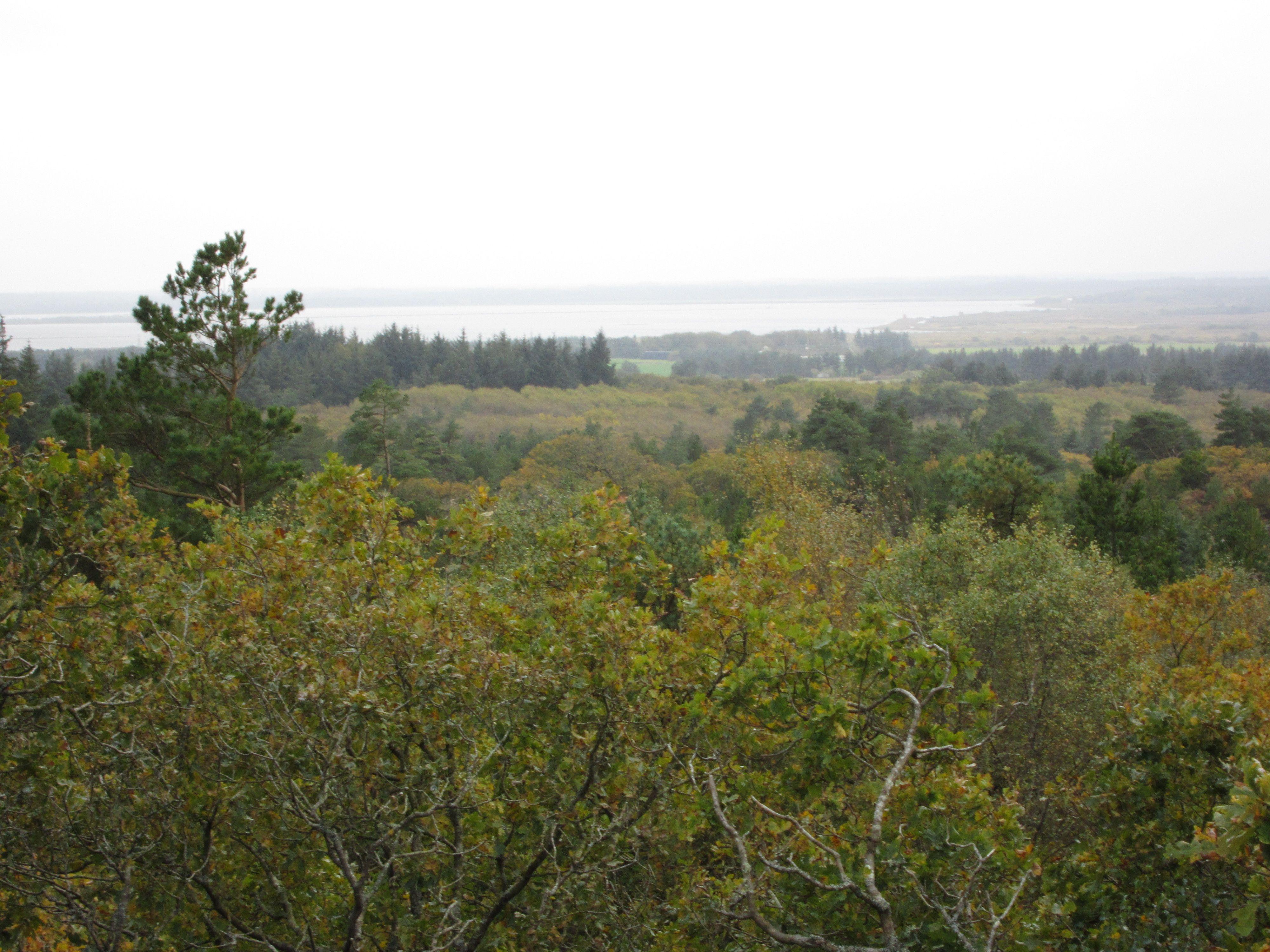Aussicht vom Blåbjerg-Nymindegab http://www.naturstyrelsen.dk/Udgivelser/Vandretursfoldere/Tysk/Blaa_nymind.htm #Blåbjerg