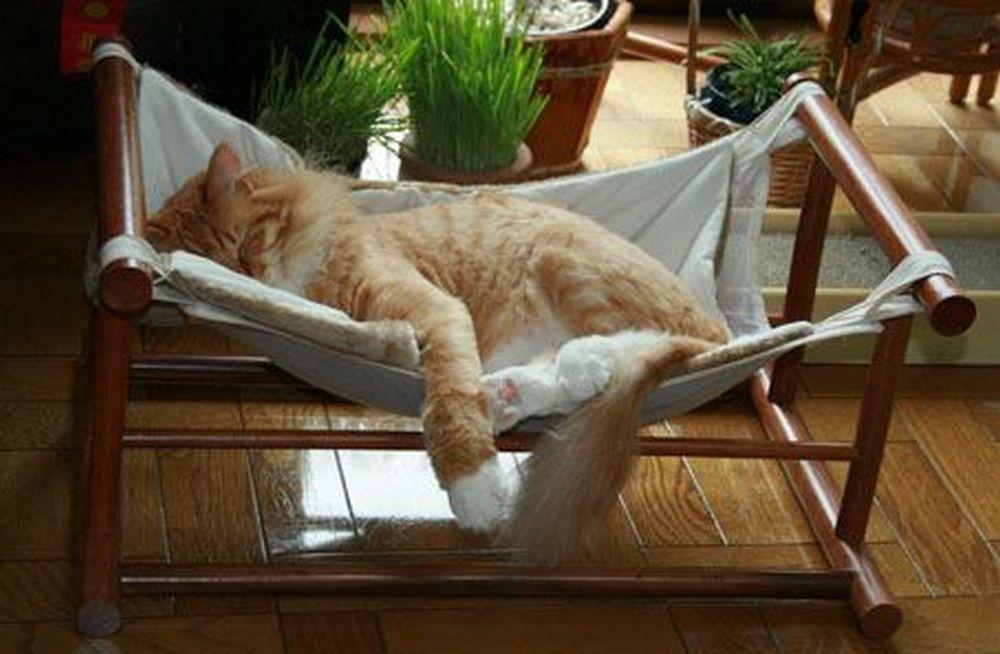 Photo of Cómo hacer una hamaca para gatos