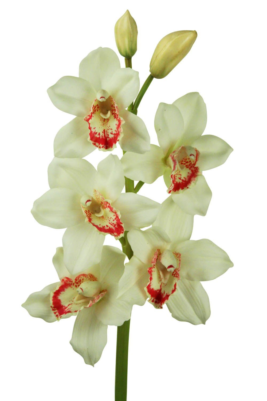 Frangipani Spray Silk Flower Stem Products Pinterest Sprays