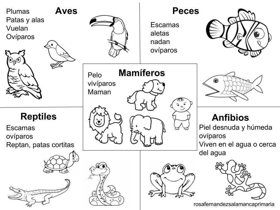 Pin De Karina Cuevas En Ejercicios Para Ninos Animales Viviparos
