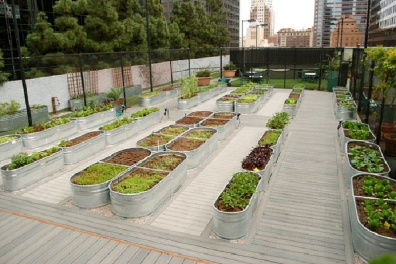 Vegetable Garden Raised Terrace   Google Search