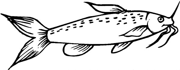 Missouri Catfish Coloring Pages Best Place To Color Coloring Pages Catfish Online Coloring