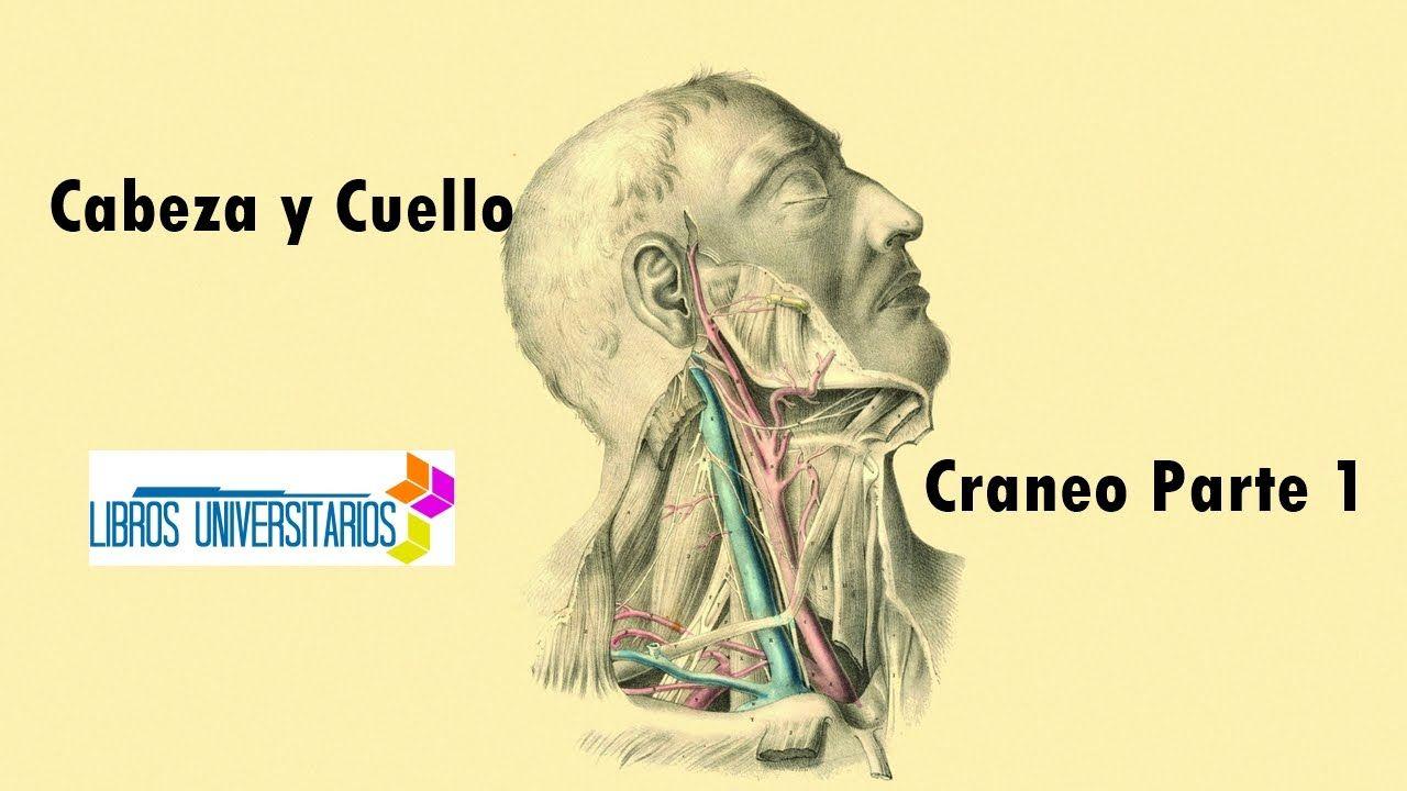 Anatomia - Craneo - Parte 1 | libros | Pinterest | Anatomía, Humano ...