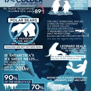 Antarctica is a continent that will leave your mind searching for words to describe it. Think you know it?? G Adventures and The Looptail's very own Liz K visualized some fun facts about Antarctica Wildlife and environmental risk.