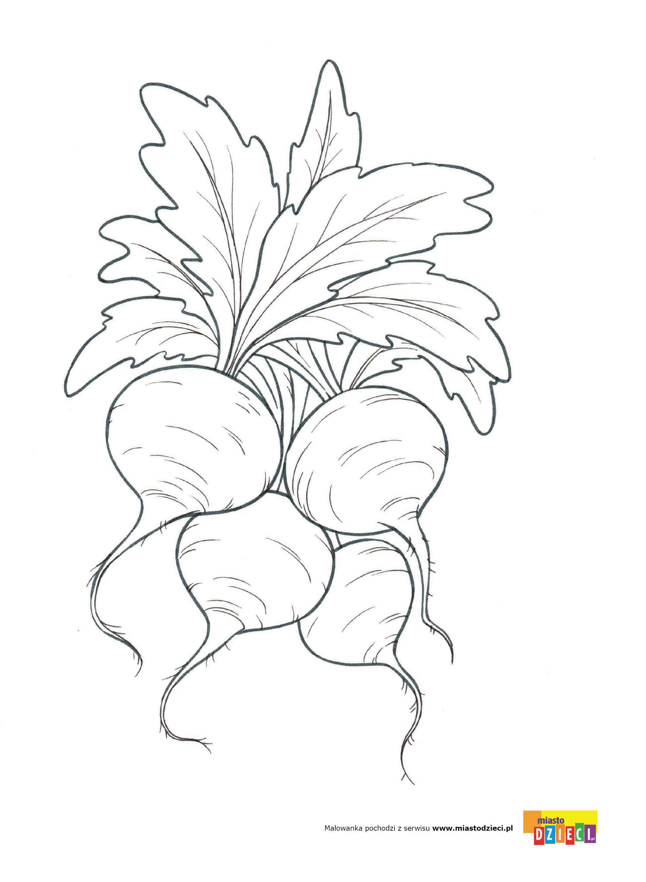 Buraki Kolorowanki Malowanki Dla Dzieci Do Drukowania Fruit Coloring Pages Flower Drawing Hand Art
