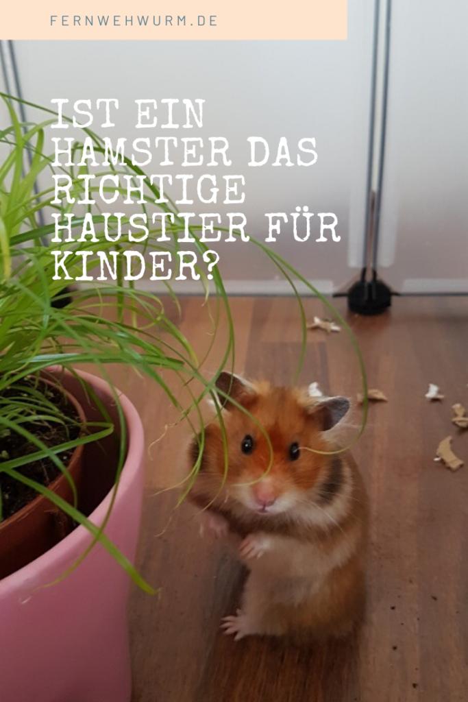 Ist Ein Hamster Das Richtige Haustier Fur Kinder In 2020 Hamster Haustiere Fur Kinder Haustier