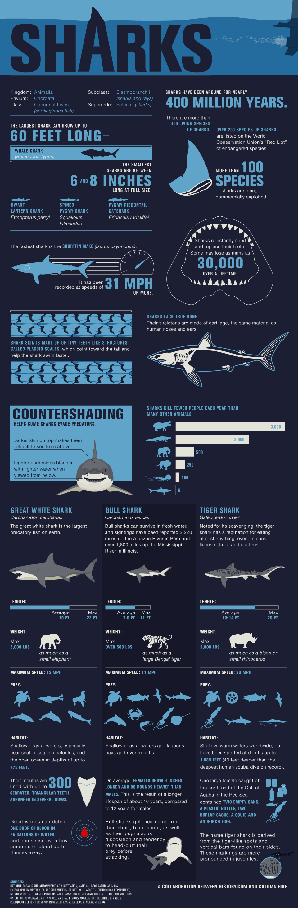 Sharks #infographic   infografia   Pinterest   Tiburones, Enseñanza ...
