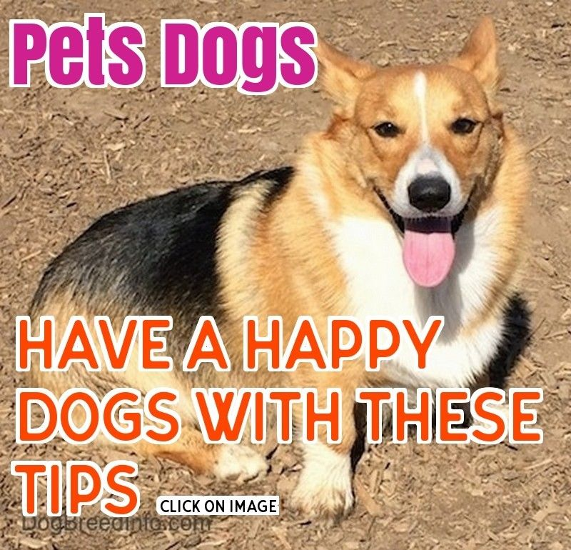 What Every Person That Owns A Dog Needs To Know With Images Dogs Pet Care Dogs Funny Dogs