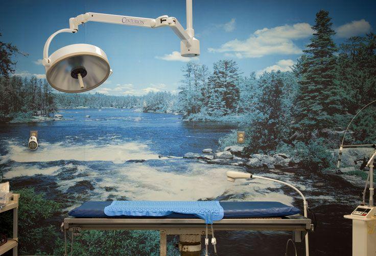 17+ Bloom plaza animal hospital ideas