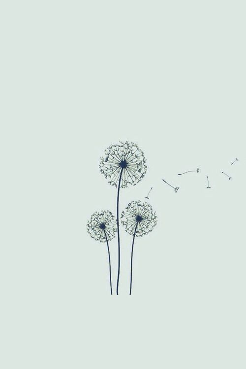 Flowers Dandelion And Wish Image Cute Drawings Tumblr