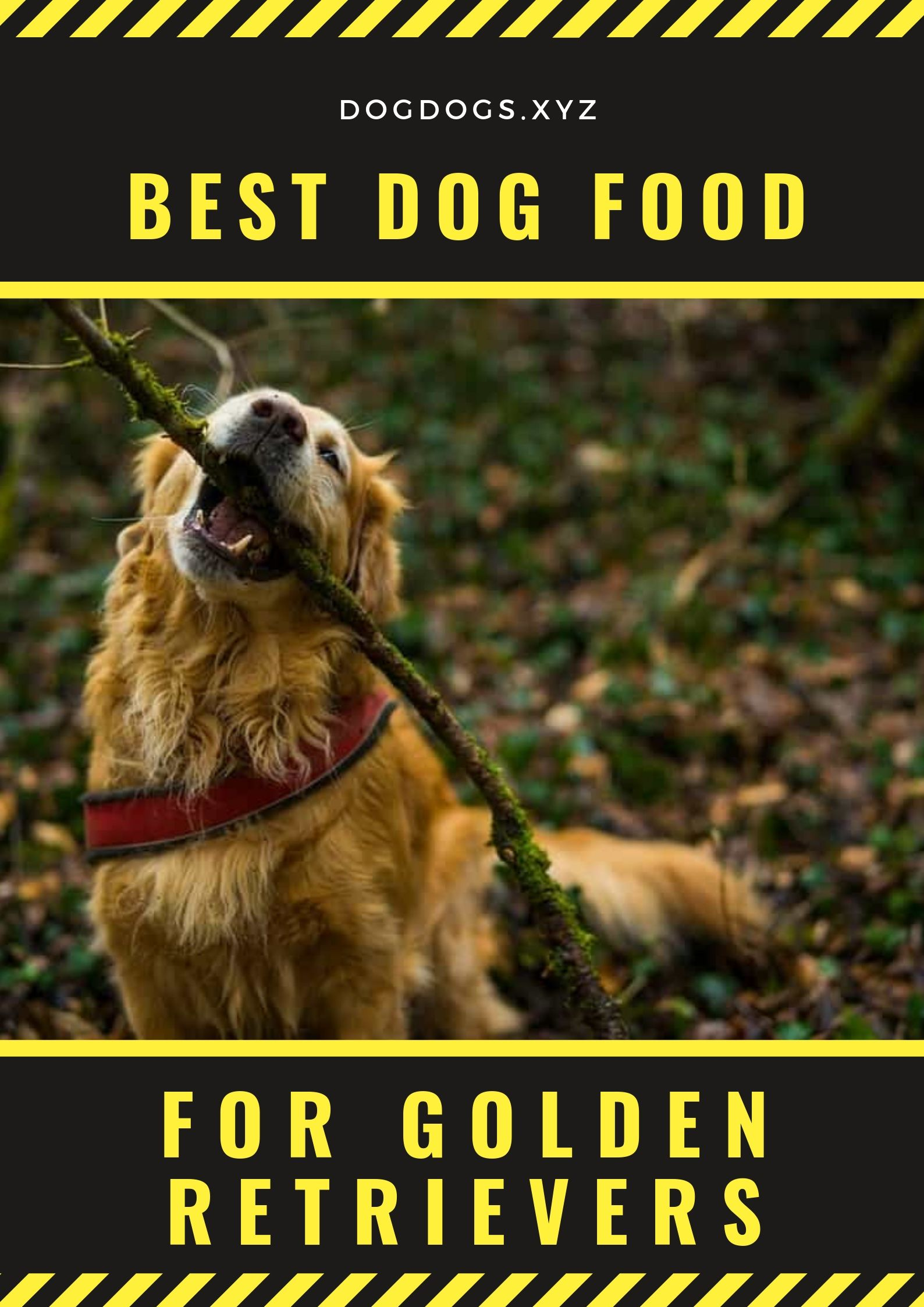 Best Dog Food For Golden Retrievers Dog Foods Dog Food Recipes