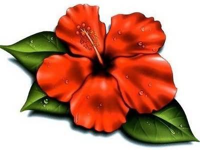 Cartoon Hibiscus Flower Clipart Best Hello Hibiscus Fleur Tropicale Tatouages Tatouages De Fleurs D Hibiscus Clipart Fleurs