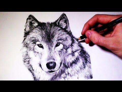 bace03ddd88fc How to draw a realistic Wolf - (Time Lapse) - YouTube | Art,Spray ...