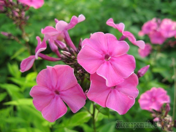 Цветы в макросъемке