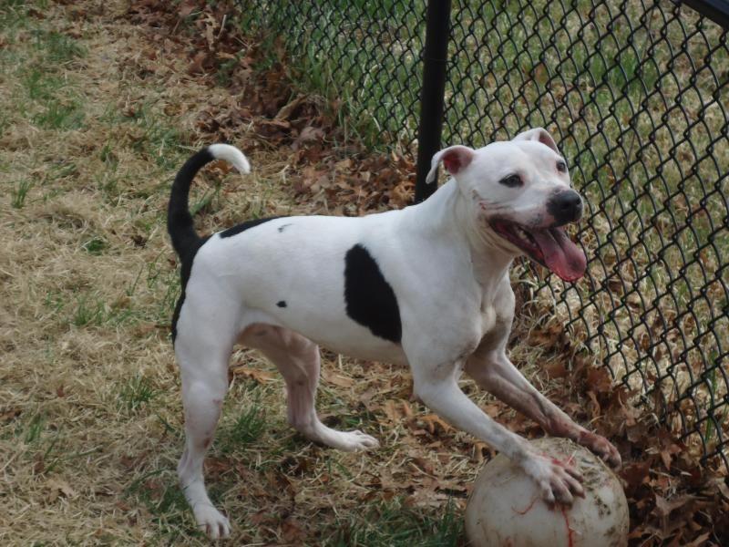 Adopt Daphne on Animal shelter, Adoption, Pets