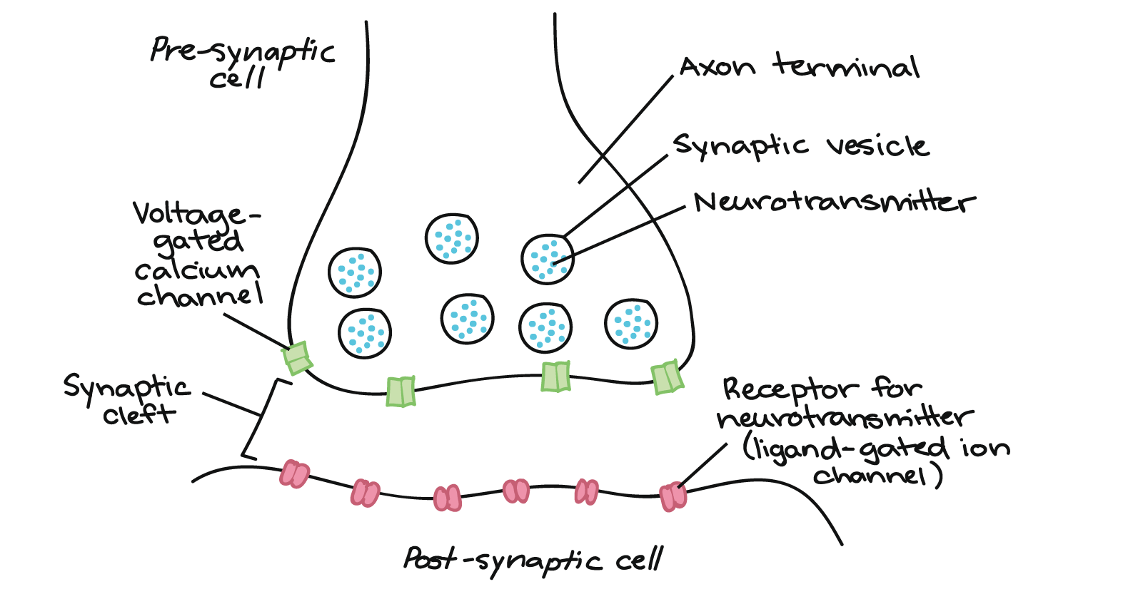 The Synapse Article