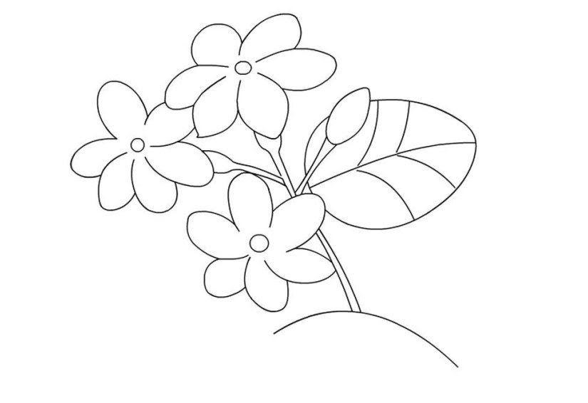 Gambar Bunga Dan Hewan Kartun Kumpulan Gambar Mewarnai Download Classroom Rules Gambar Hewan Kartun Burung Han Gambar Bunga Menggambar Bunga Matahari Sketsa