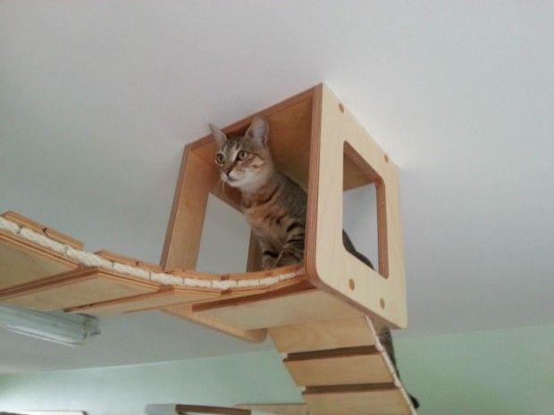 parcours pour chats par goldtatze cats maison chat. Black Bedroom Furniture Sets. Home Design Ideas