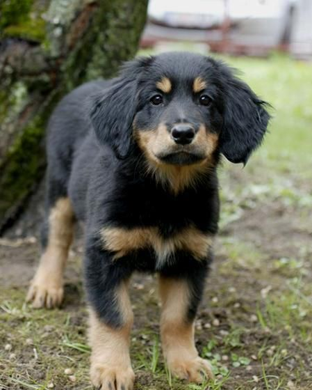 Puppy Pictures Breeds Puppies Cute Dogs Cute Puppies