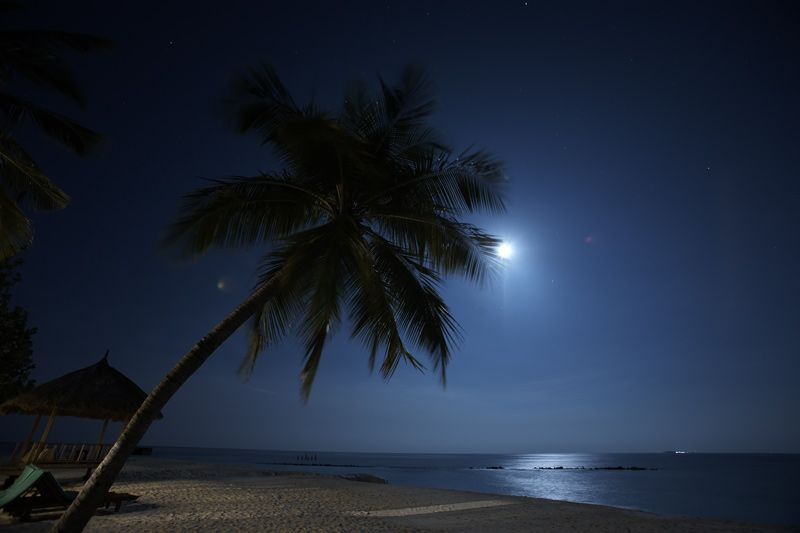 Lunar beach (coast, landscape, moon, night, ocean, palm ...