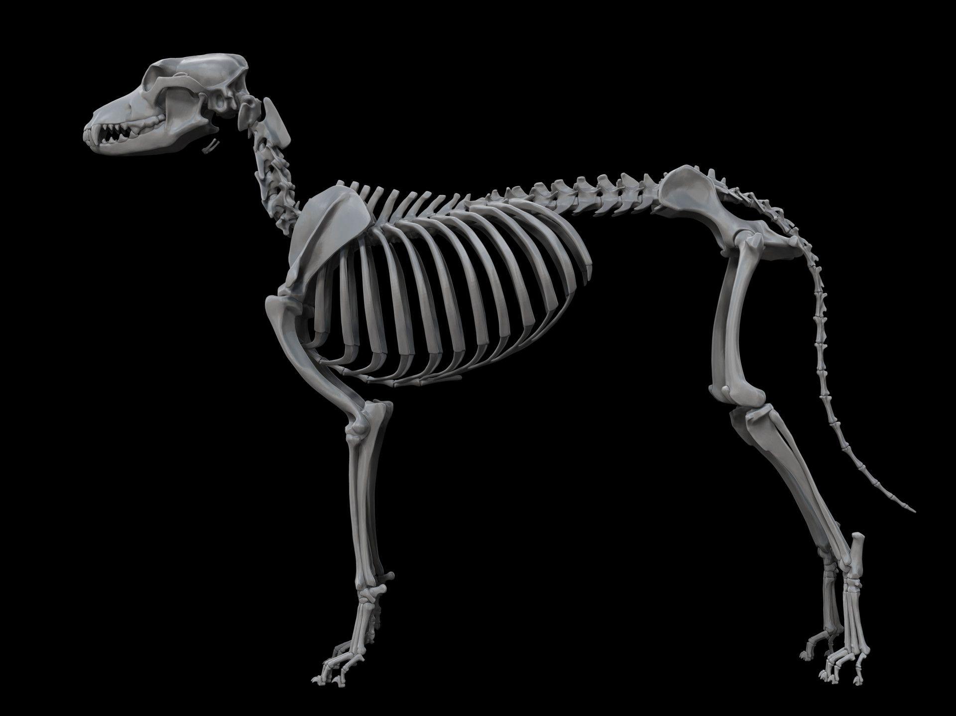 Картинка скелета человека и головы животного
