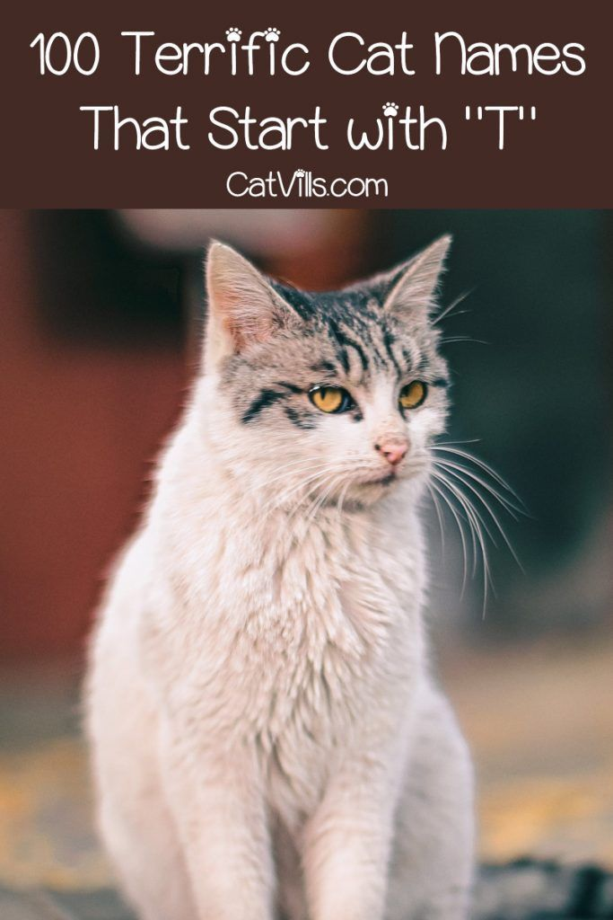 100 Terrific Cat Names That Start with T | Girl cat names