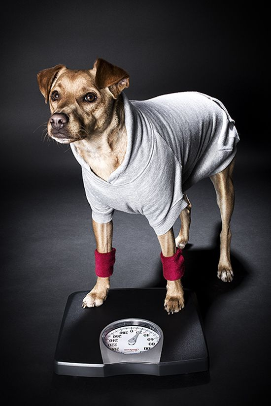 Pet Wellness 3 Dog Friendly At Home Workouts Pawsh Magazine Studio Pet Wellness At Home Workouts Dog Friends