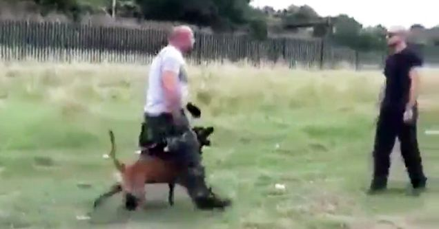 Guy S Attack Dog Is So Well Trained It S Insane Dogs Dog Attack Police Dogs