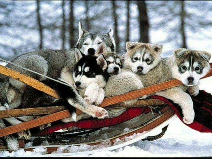 I want to go sledding with these guys!   ;)