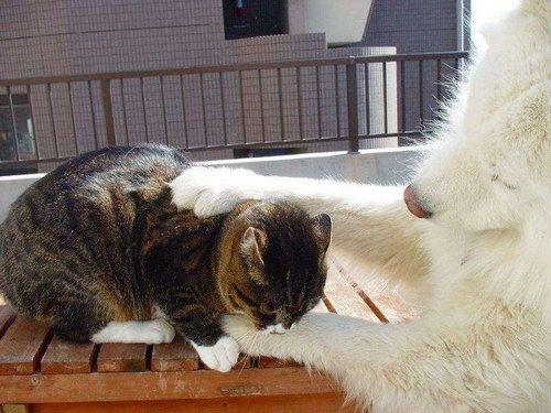 Животный мир :: Любовь и дружба животных фото 24