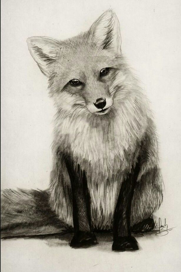 Pin by Savannah Martinez on Wolf/Fox Images   Pencil ...