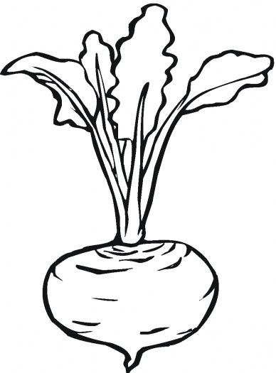 Beetroot 7 coloring page super coloring lettuce turnip for Turnip coloring page