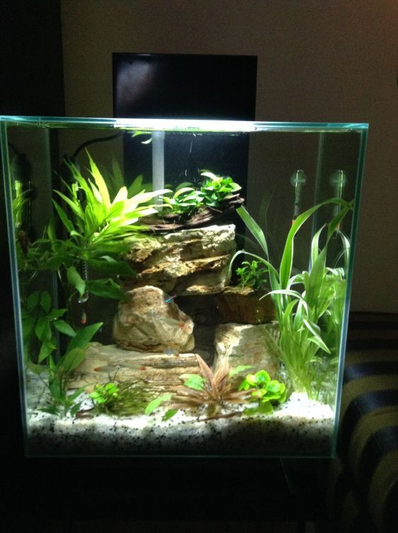 Best Aquascaping Freshwater 084 | aquarium | Betta fish ...