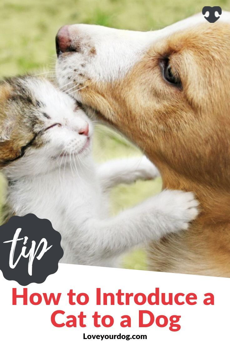 How to Introduce a Cat to a Dog Socialization Tips