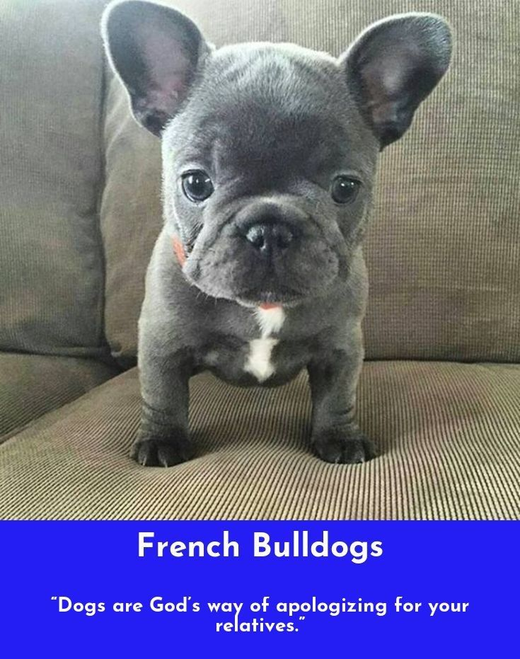 Petting Scratching And Cuddling A Dog Could Be As Soothing To The Mind And Heart As Dee Supersusser Welpe Franzosische Bulldoggenbabys Welpenbilder