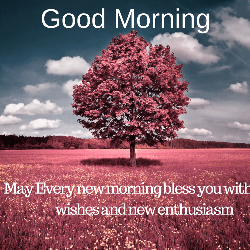 Images Of Good Morning With Tree