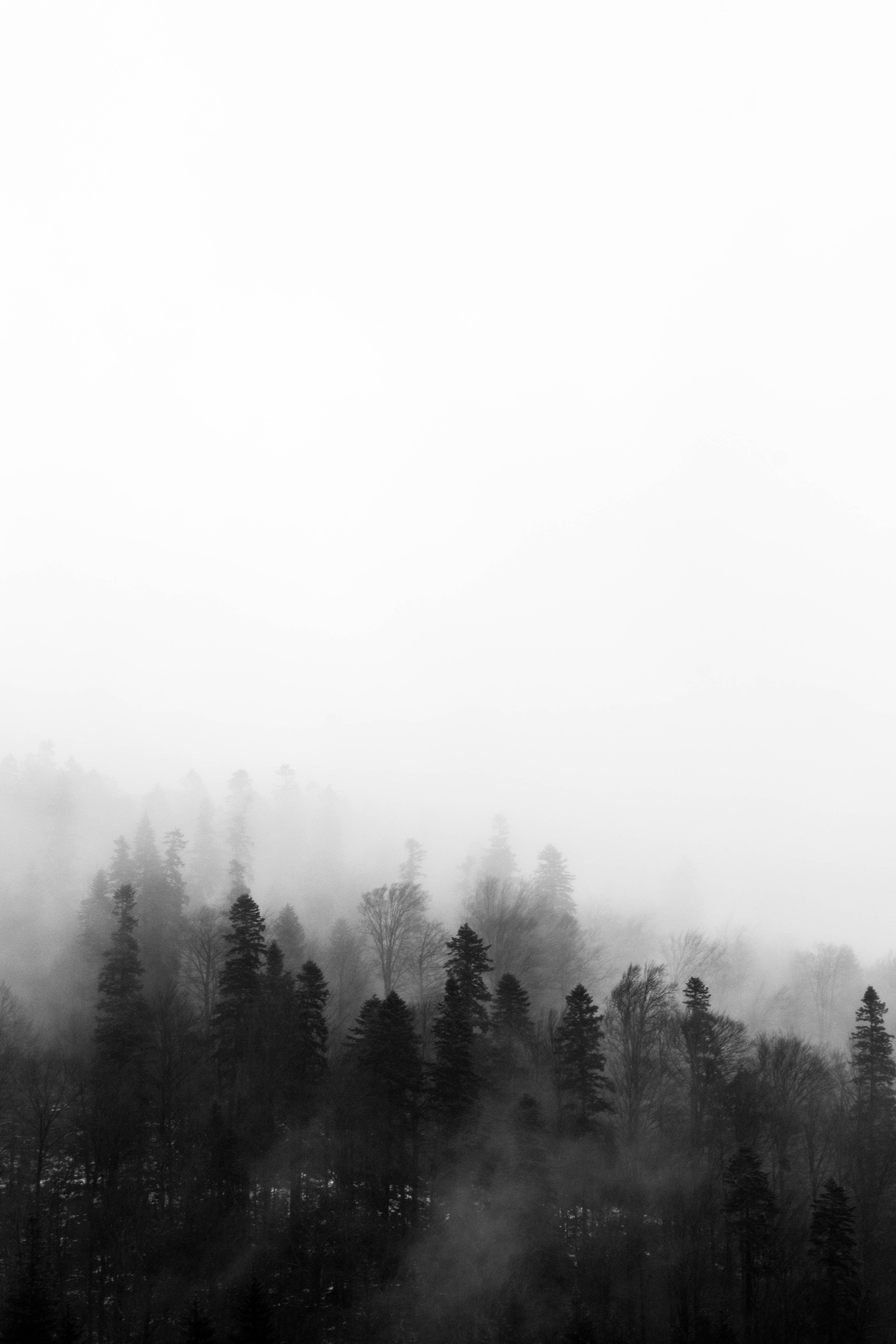 New Android Landscape Wallpapers Black And White Tree Black And White Wallpaper Black And White Background