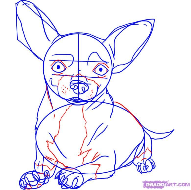 Chihuahua drawing | how to draw a chihuahua step 5 | dogs ...