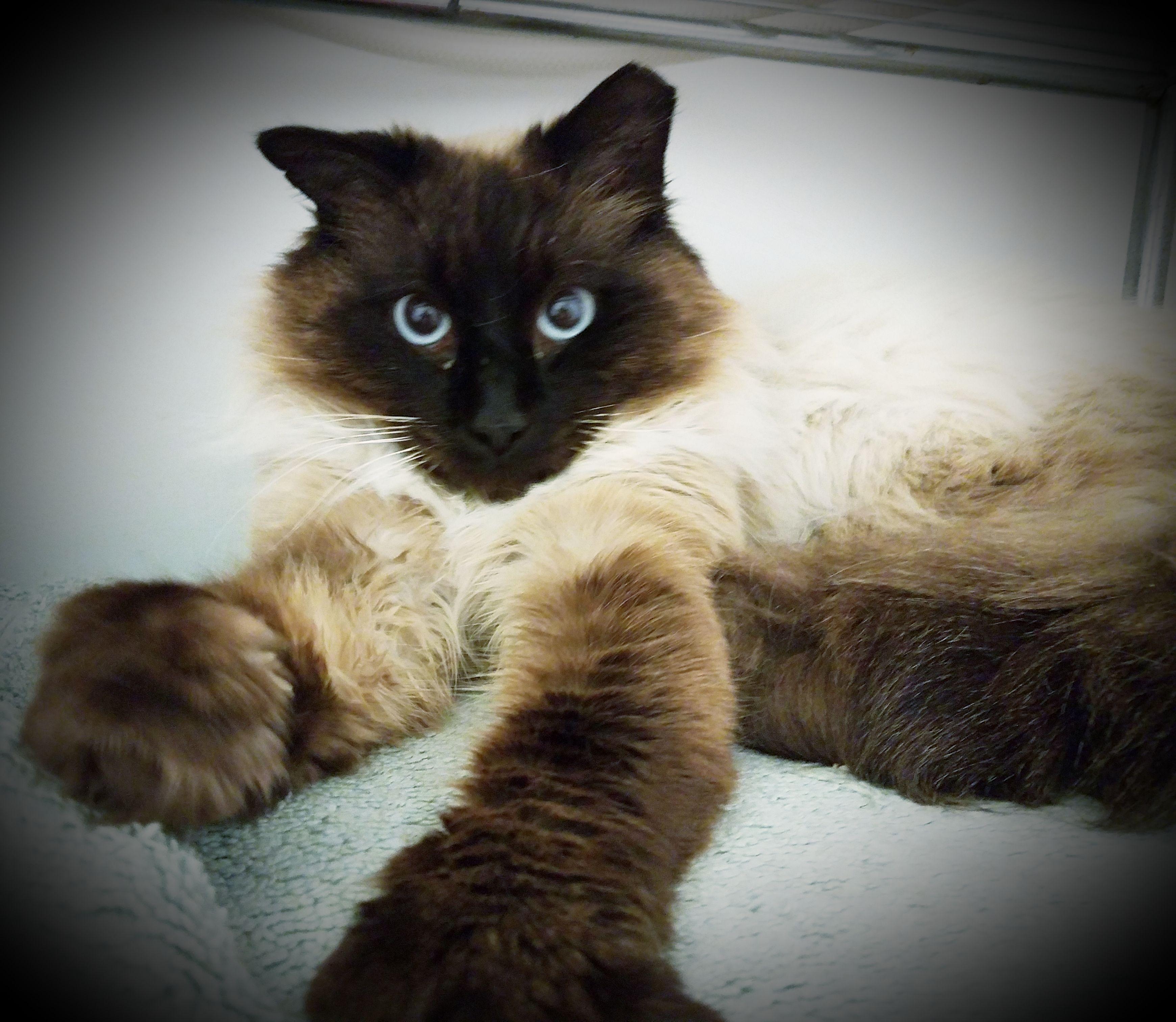 Adopt Dimitri on Pet supplies plus, Cat allergies, Adoption