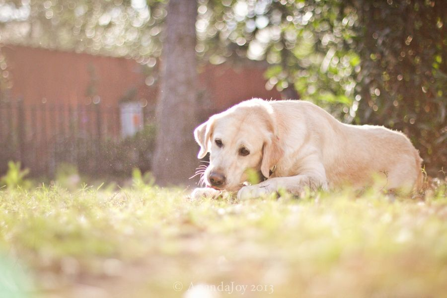 Sweetie by Ananda Tiller, via 500px